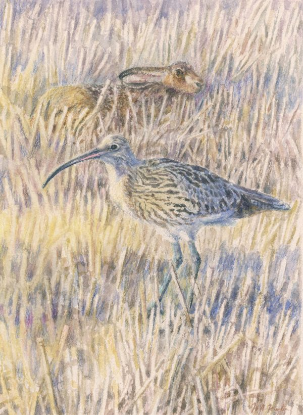 Curlew and Hare