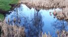 Reflexion von Himmel und Birken auf dem Regenrückhaltebecken