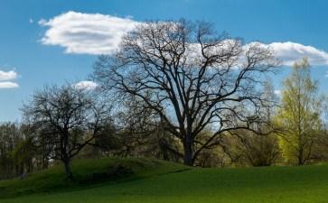 Träd i ljus