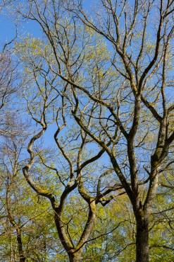 Intrikat grenverk