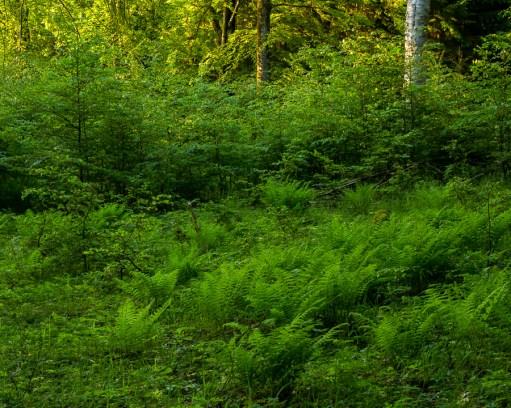 Grönytor