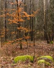 Lövad står trädet