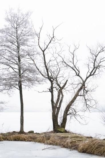 20170128 Växjösjön