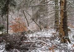 2017-02-05 Högstorpskogen