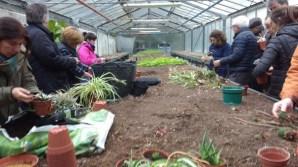 uliako-lore-baratzak-taller-de-poda-multiplicacion-plantas