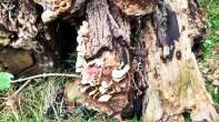 habitat-intsektuak-uliako-mintegien-parkea