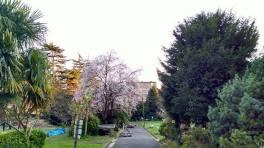ciruelo-jardin-uliako-lore-baratzak-donostia