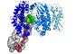UlrichEckhard_Clostridial-Collagenolysis_1