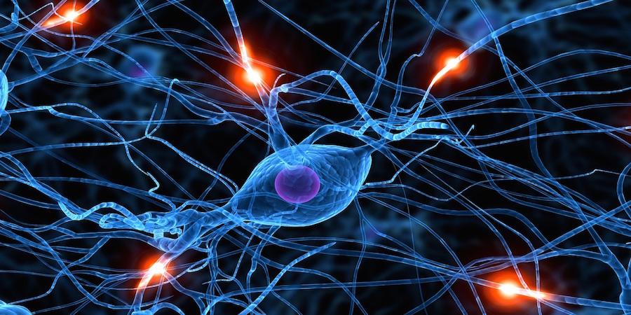 synapses-web
