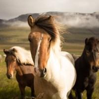 Das Leben ist ein Ponyhof!