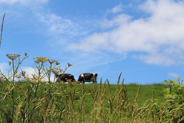 meadow-2503453_1280.jpg