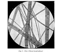 Linen Flax fibers