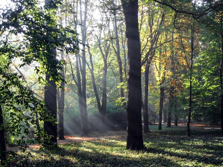 Lazienki Park, Warszawa, Poland (2005)