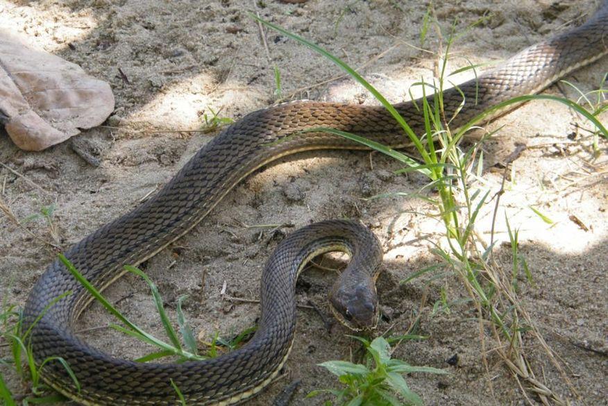 Polícia Ambiental resgata seis cobras de cinco espécies diferentes no Litoral paraibano em apenas um dia