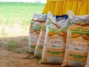 Venezuela cuenta con más de 700 mil hectáreas para la siembra de maíz