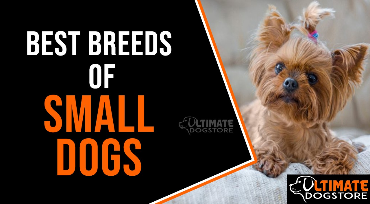 Best breeds of Small Dogs
