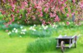 cropped-spring-beauty.jpg