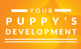 Your puppy's development