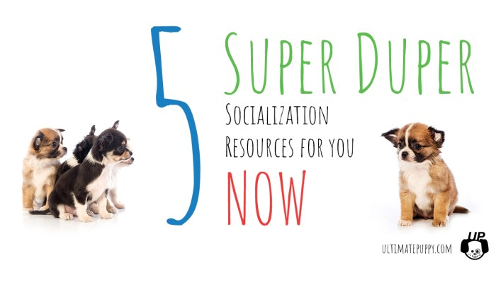 5 Socialization Resources