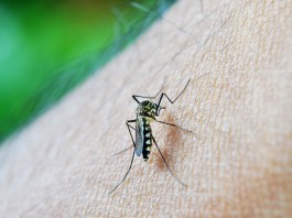 febbre dengue