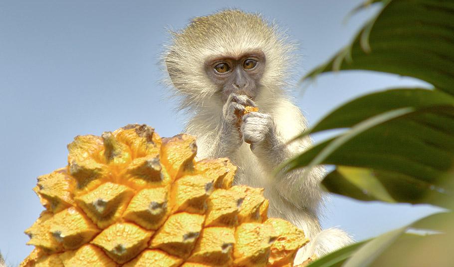 Sky Entertainment & Love Nature fokussieren auf die Welt der Tiere