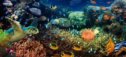 Dokumentarfilm The Last Reef wurde in Imax 3D Ultra HD aufgenommen