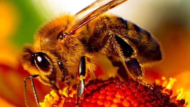 Neonicotinoid Insecticides