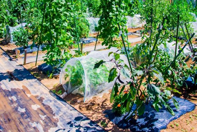 家庭菜園のイメージ