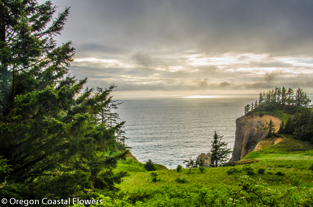 Experience the Best Runs on the Oregon Coast.