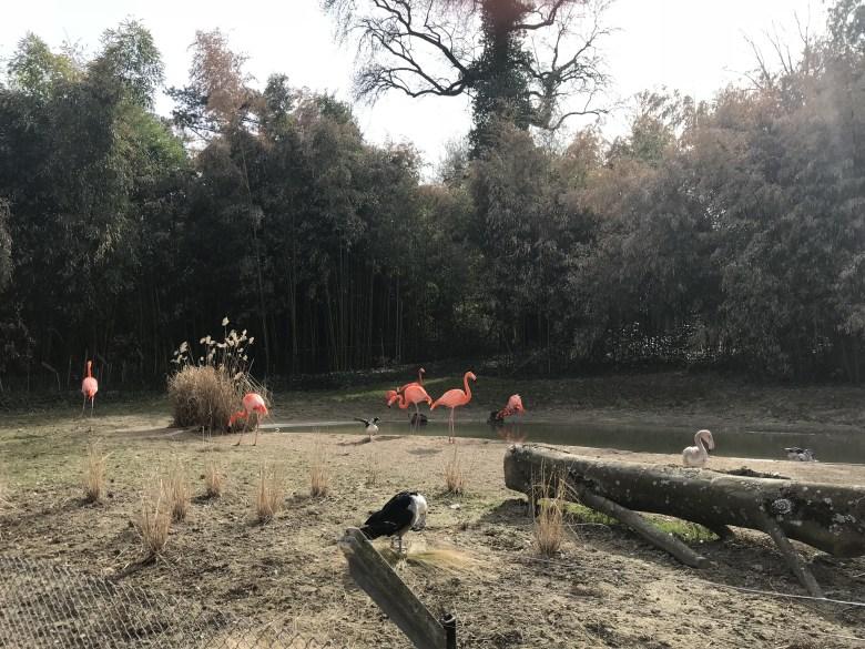 Parque Zoológico de Mulhouse