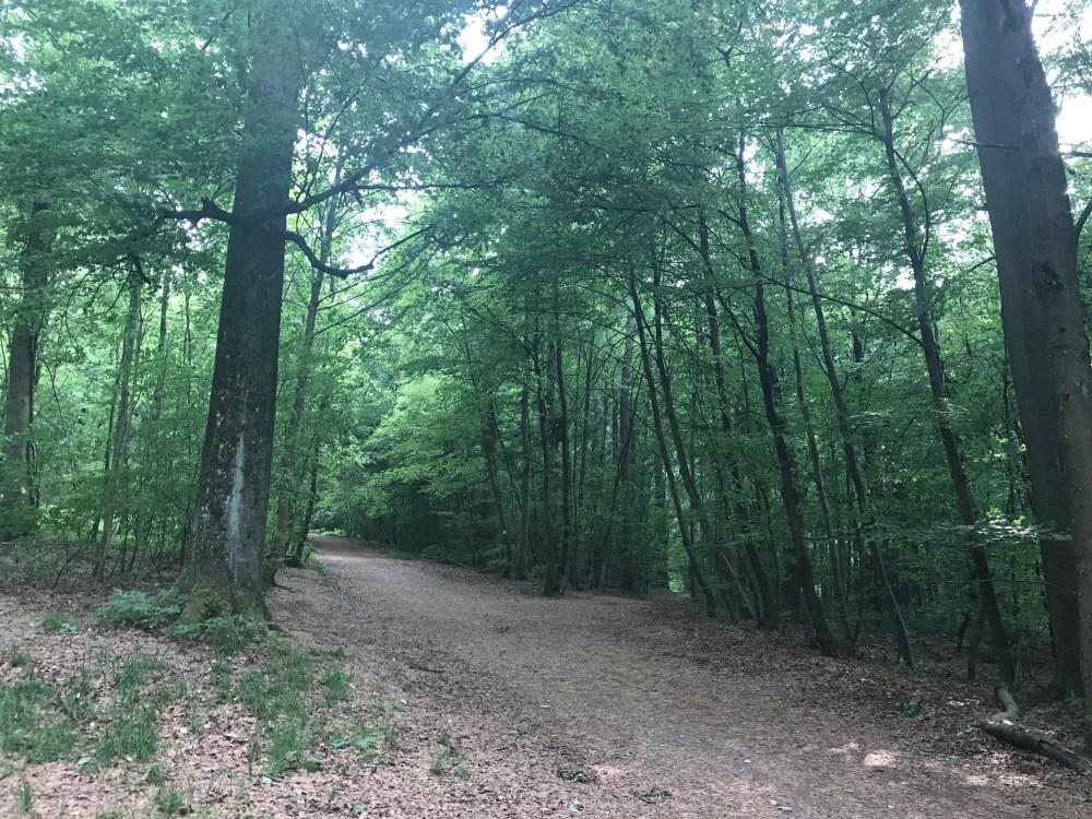 As trilhas da Floresta Tannenwald