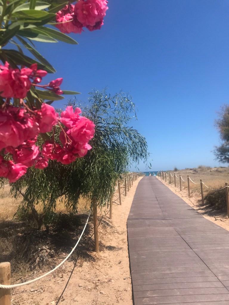 Praia de Sagunto, Valencia, e os detalhes das flores
