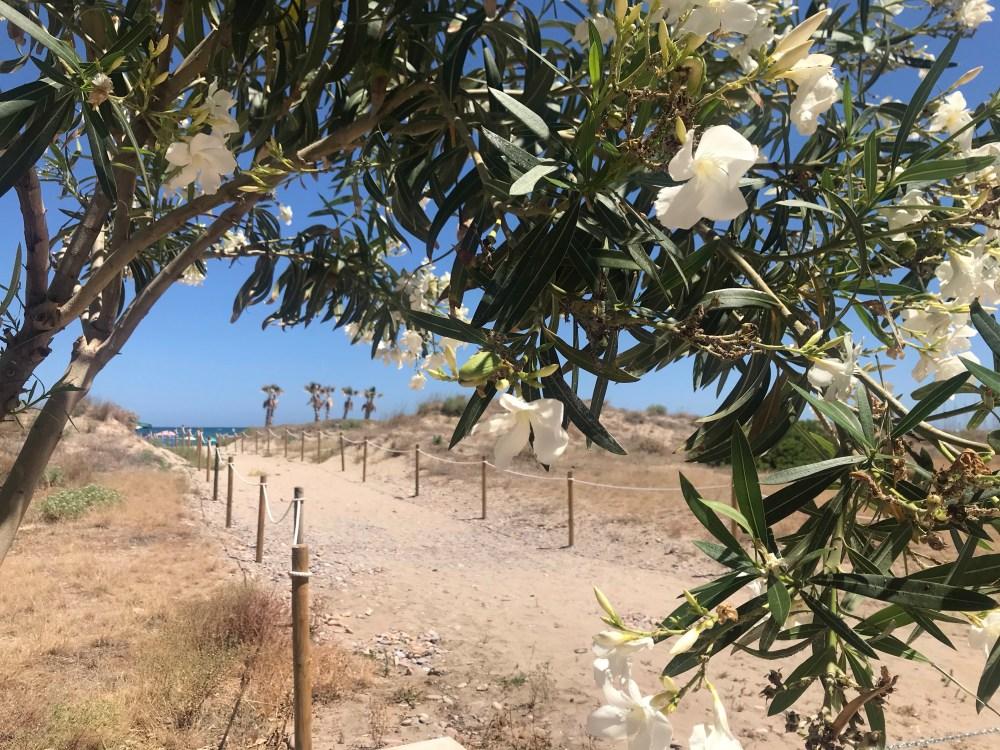 Praia de Sagunto com flores