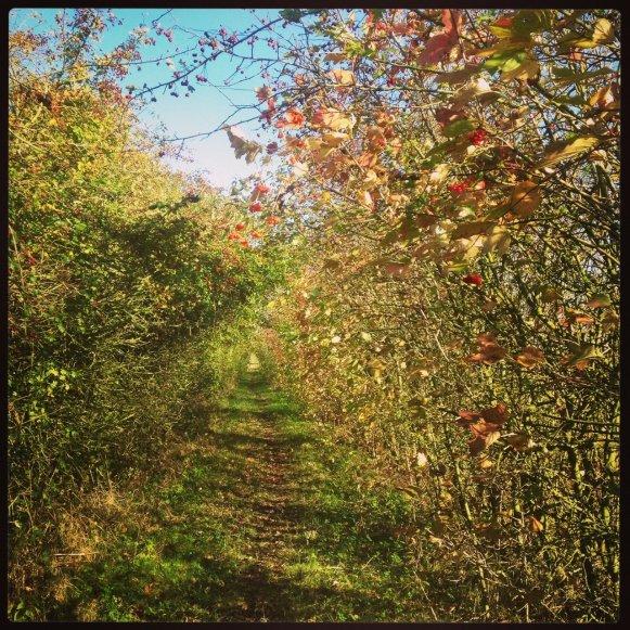 Autumn Colours on West Fen Drove