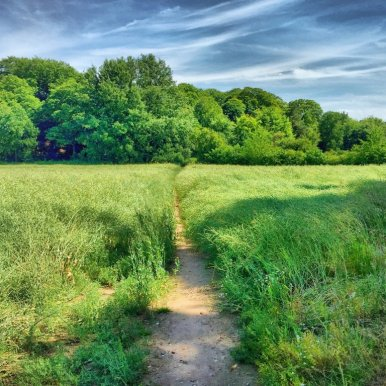Heading across the fields at Clumber Park