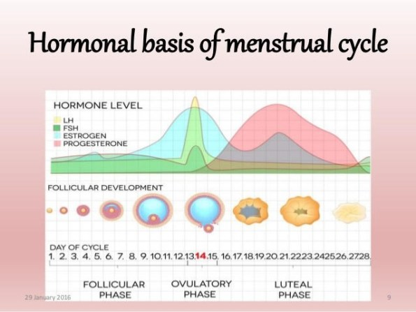 Menstrual cycles hormones