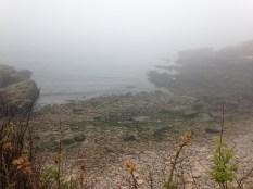 More Foggy Coast