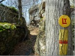Trail Markers on the Loyalsock Trail.