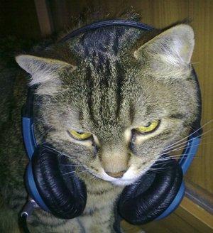скайп-кот