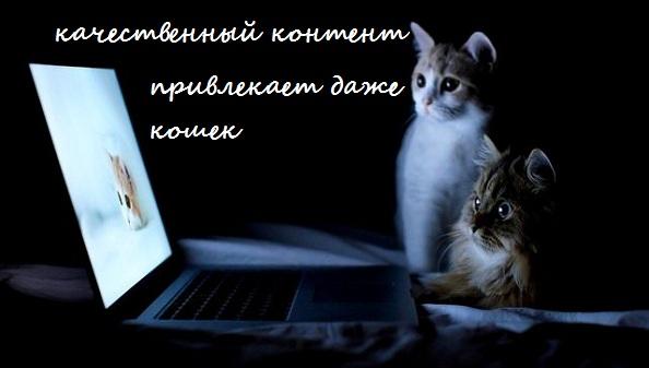 качественный контент даже кошки читают