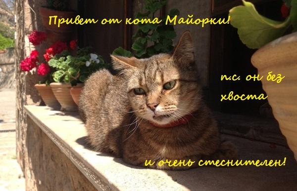 кот с Майорки