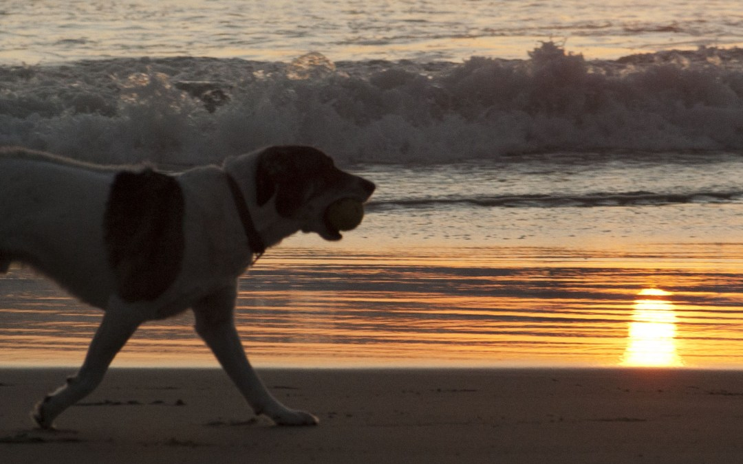 Jake and Uma: Sunset at Beer Can Beach