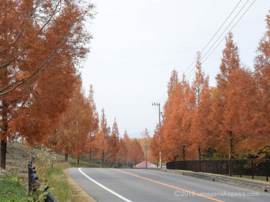 高松空港のメタセコイア並木