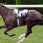 土曜の新馬戦展望・7/1(土)・福島5R・絶好調のヨハネスブルグ産駒がここも勝利か?
