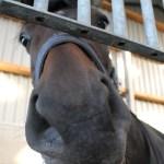 2019サンデーTC募集馬・評価情報② No.124~145