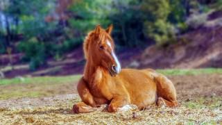 現役獣医師による2018社台グループオーナーズ募集馬評価