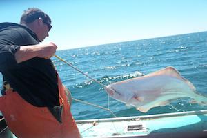 Participating fisherman snagging a halibut