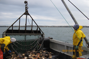 Maine DMR scallop survey in Cobscook Bay