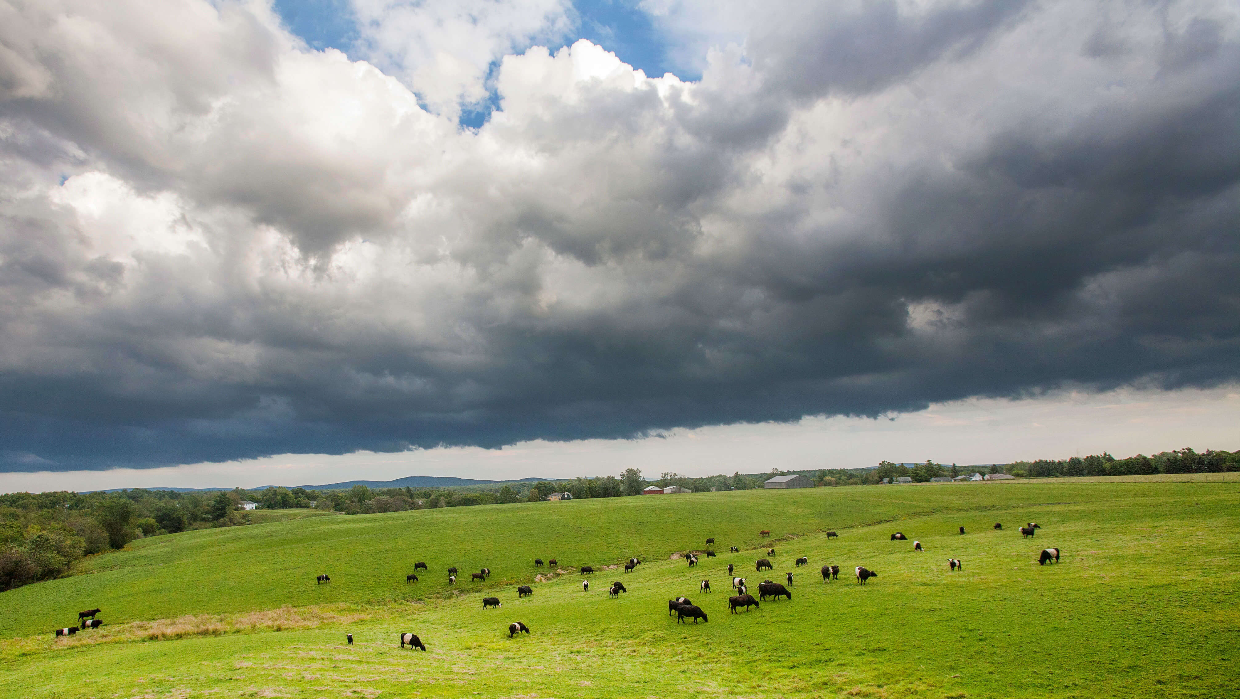 Clouds over cow field