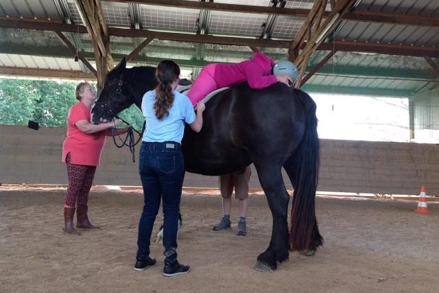 Formation technique à la médiation animale avec cheval